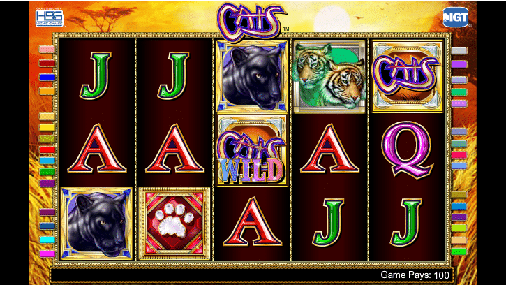 Cats Slot Gameplay